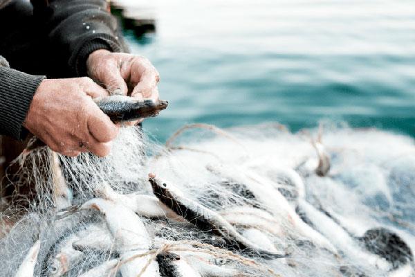 negocio-pesquero